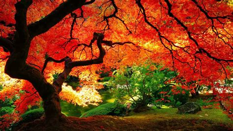 Beautiful Autumn Wallpapers Desktop by All New Wallpaper The Beautiful Autumn Wallpaper For