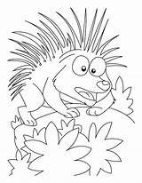 Porcupine Coloring Printable Attacking Mood Getcolorings sketch template