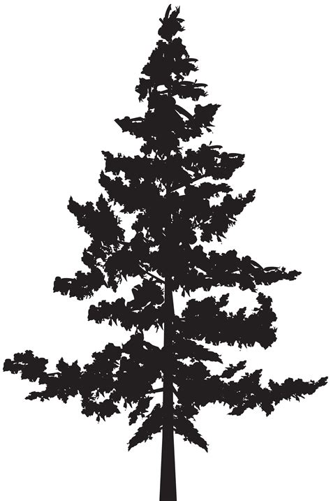 library  cedar tree silhouette svg freeuse  png