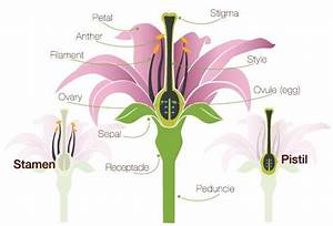 Flower Anatomy  The Parts Of A Flower