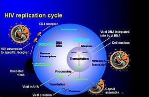 Pin On Hiv Replication Cycle