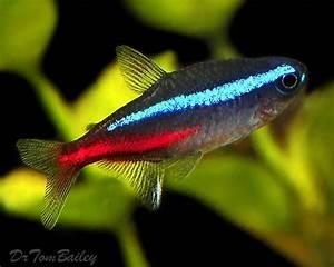 Gourmet meals Planted aquarium and Fish on Pinterest