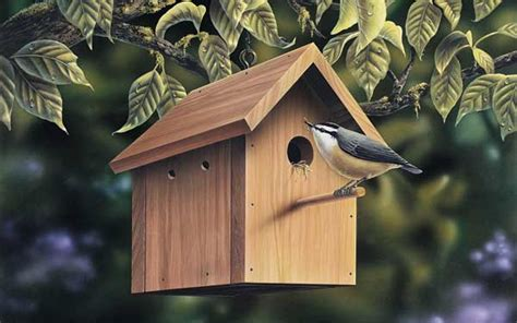 types  birdhouses house plans