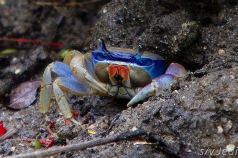 colorful crab abcs of animal world the world s most colorful oddest