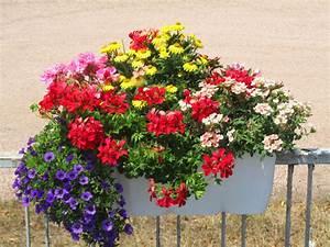 Blumen Für Südbalkon : balkonpflanzen von harro 39 s pflanzenwelt homify ~ Watch28wear.com Haus und Dekorationen