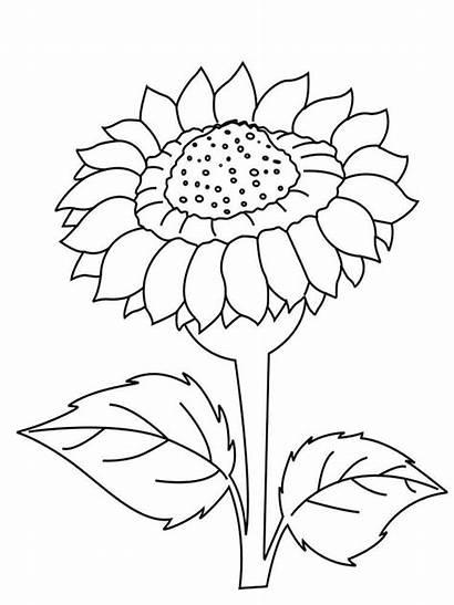 Coloring Sunflower Flower Printable Ausmalbilder Sonnenblume Flowers