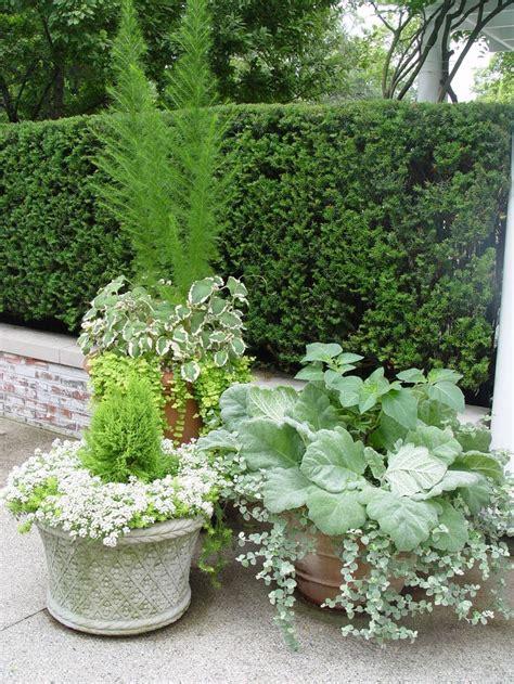 potted trees for patio de 1604 b 228 sta container gardening ideas bilderna p 229 4373