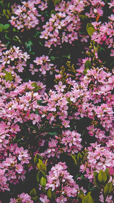 nv flower pink spring happy nature wallpaper