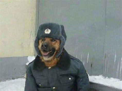 Comrade Doggo Anormaldayinrussia