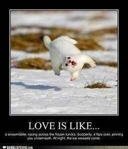Love is like... a snowmobile, racing across the frozen ...