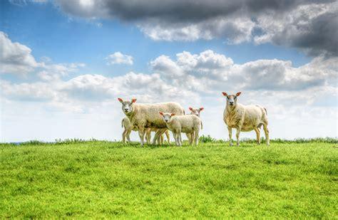 stock photo  animal countryside farm