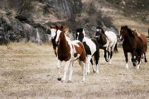 Latest Fashion Trends: Galloping Horses