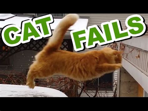 Epic Cat Fails ★ Try Not To Laugh! (hd) [epic Laughs