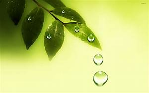 Water drops on the leaves wallpaper - Digital Art ...