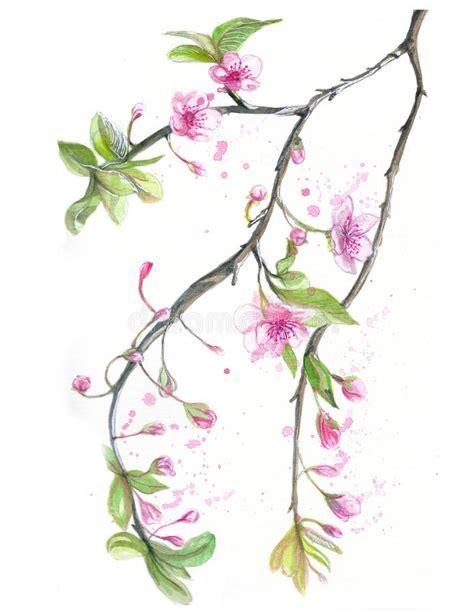 Flor Dibujo De Las Flores De Cerezo Stock de ilustración