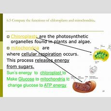 Ppt  Chapter 6 A Tour Of A Cell Powerpoint Presentation Id1278959