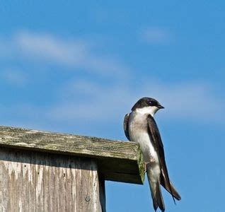 how to get rid how to get and birds on