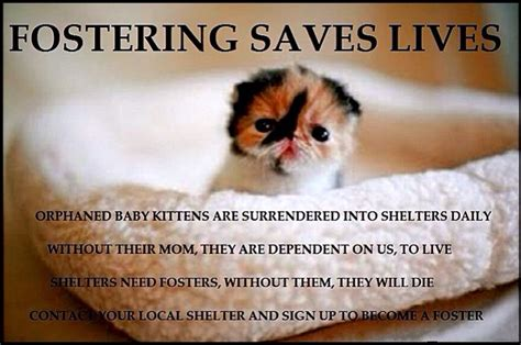 fostering saves lives animal rescue awareness