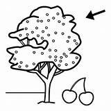 Coloring Tree Cherry Preschool Crafts Worksheets Comment Preschoolactivities Them sketch template
