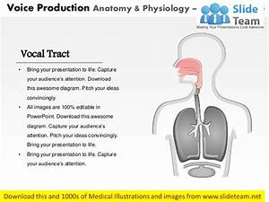Voice Production Anatomy  U0026 Physiology Medical Images For