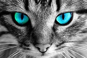 Cats And Dogs Can See Spirits And Frequencies That Humans