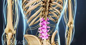 Lumbar Spine Anatomy And Pain