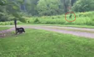 North Carolina Bigfoot Sighting