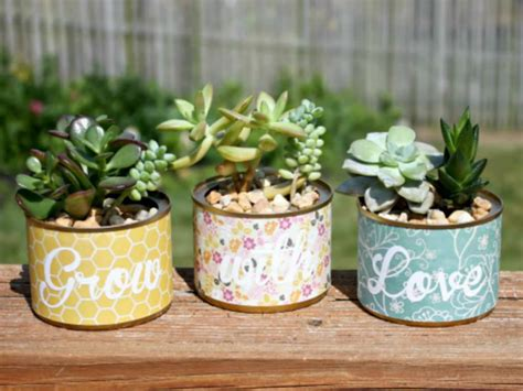 in a pot how to grow succulents in a pot without drainage holes world of succulents