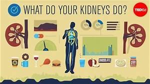 How Do Your Kidneys Work  - Emma Bryce