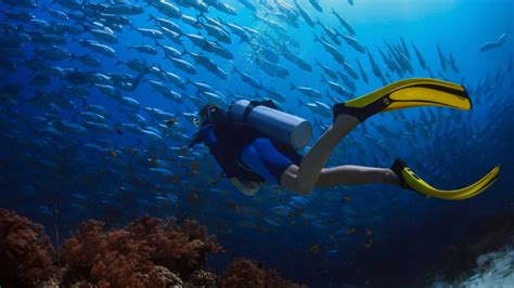 Padi Dive by Diving Lessons Phuket Padi Diving Courses In Phuket