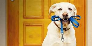 Cincinnati pet sitting dog walking overnight pet for Professional dog walker rates