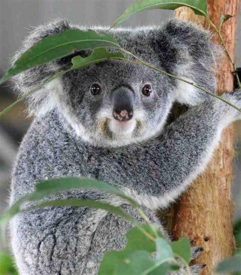 Billabong Zoo  Port Macquarie Koala And Wildlife Park