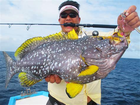 grouper yellowfin maldives mayhem 5kgs