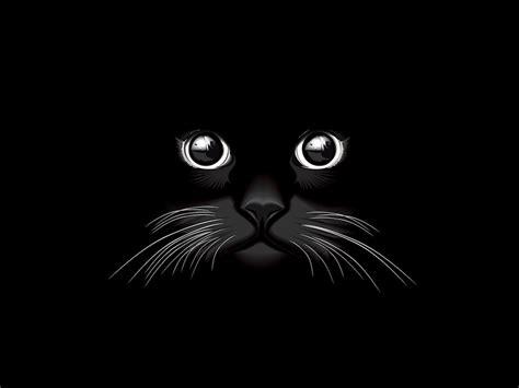 black cat vector  vectors ui
