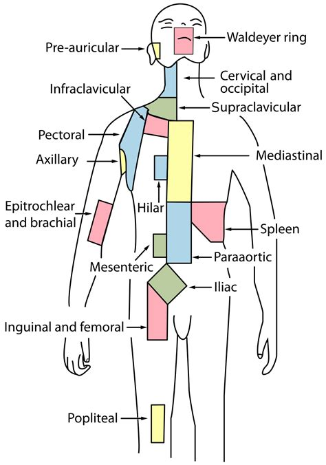 Cervical Lymph Nodes Wikipedia