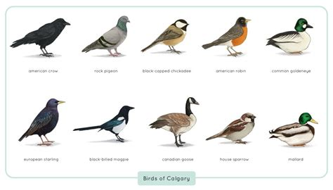 cafechoo image list of common birds