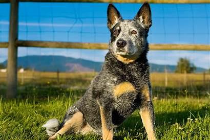 Breeds Dog Webmd Quiz Dogs Know Pet