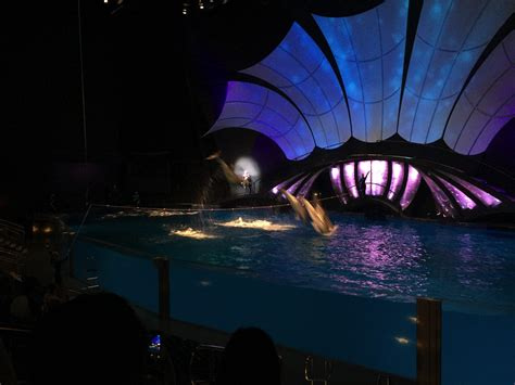 The New Sea Lion Exhibit And Dolphin Show At The Georgia
