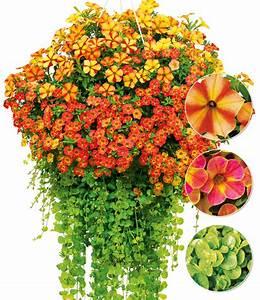 Ampelpflanzen Und Hängepflanzen Garten : ampel mix sunny days top qualit t kaufen baldur garten ~ Buech-reservation.com Haus und Dekorationen