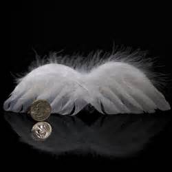 Real White Feather Angel Wings