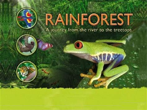 tropical wild templat rainforest powerpoint template bountr info
