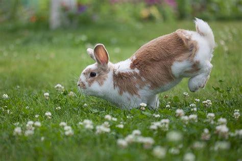 hopping bunny linas t bunny hop pixdaus