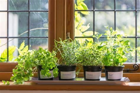 jenis tanaman herba bisa ditanam pot