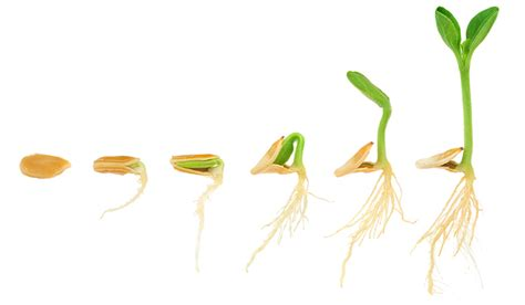 grow light seedlings ihidrousa com blog news great results growing seedlings indoors windowsill vs a grow light