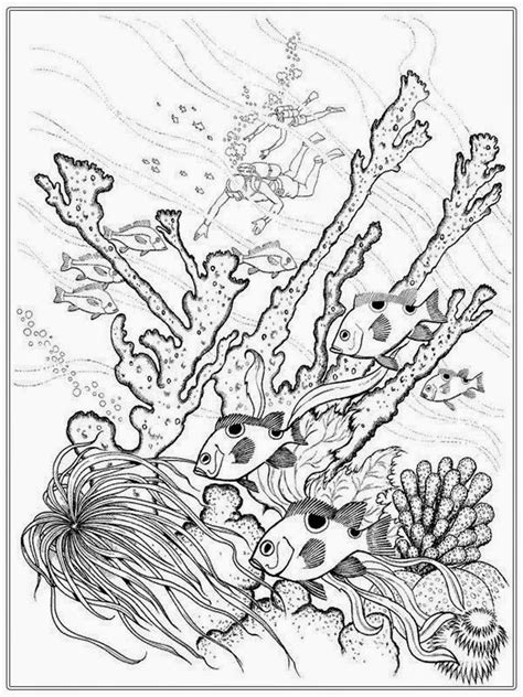 adult  fish coloring pages realistic coloring pages