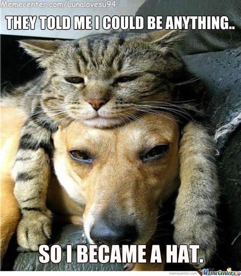 Fancy Cat Meme - image gallery kitty with hat meme