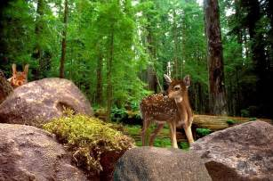 Nature Forest with Animals