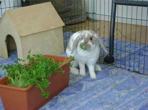 Pvc Boden Kaninchen by Neu Im Forum Welcher Bodenbelag F 252 R Gehege Kaninchen