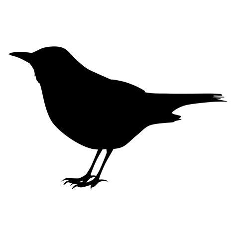 Blackbird Free Stock Photo - Public Domain Pictures