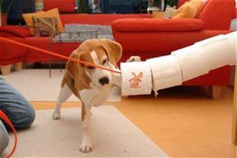 spielregeln einstiegstipps spass mit hund